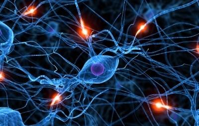 sympathetic nervous system SNS